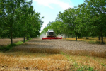 Agroforesterie Culture Photo