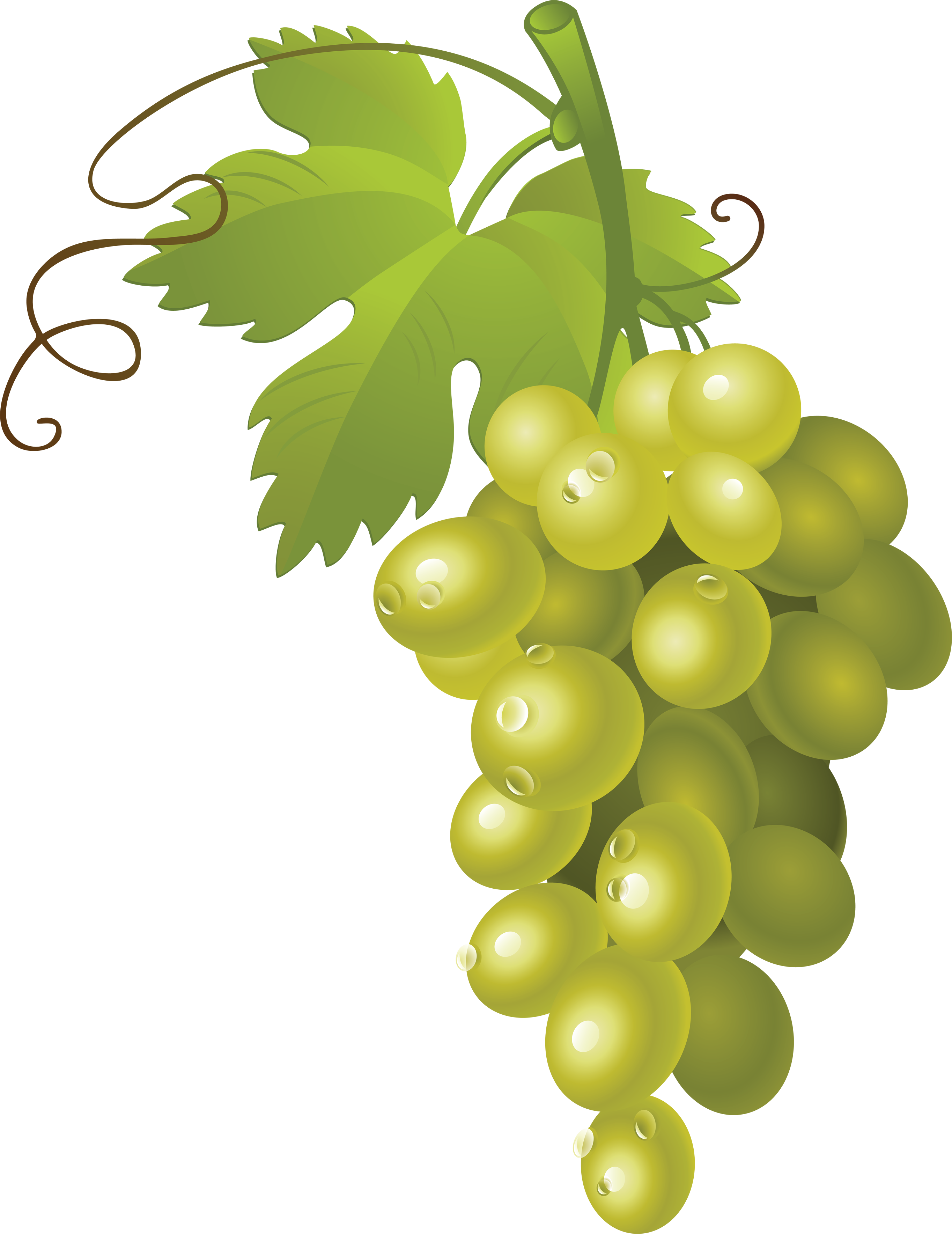 Puce Grape PNG2971